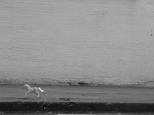 horseuy2